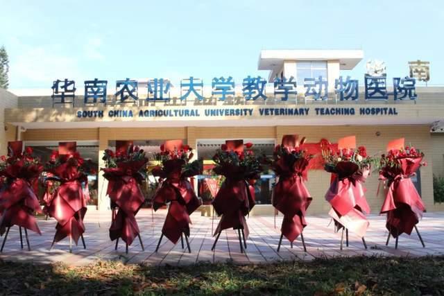 直击现场:华南地区第一家!华南农业大学教学动物医院升级完毕!
